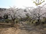 春のむつ市早掛沼公園